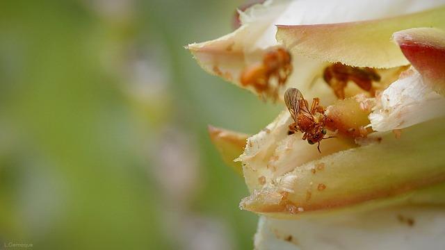 Mandacarú Flower, Garden, Bees