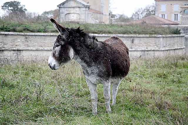 Donkey, Mane, Shoe, Horsehair, Equine, Animals, Gallop