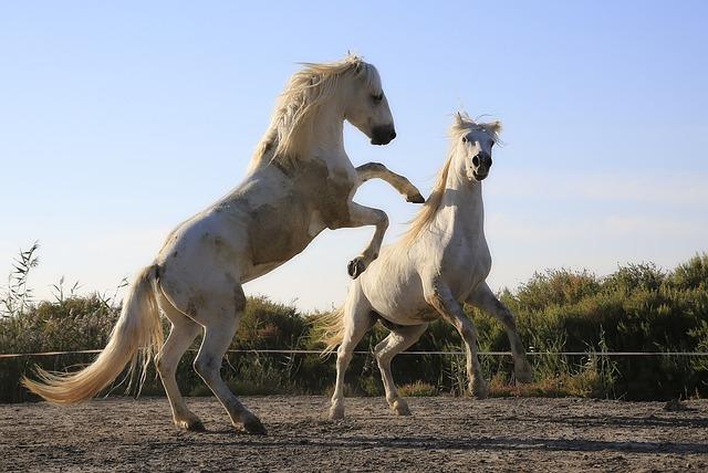 Standard, Horses, Combat, Mane, Horse, Horseback Riding