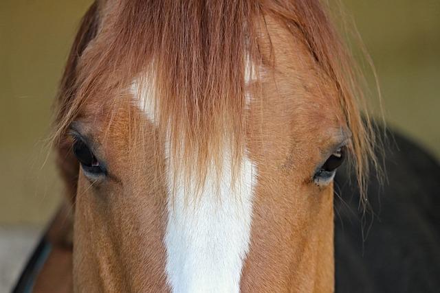 Horse, Head, Mane, Hair, Fur, Eyes, View, Horses Eye
