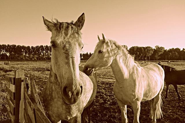 Horse, Animal, Mammal, Equine, Head, Mane, Fence