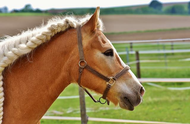 Horse, Coupling, Mane, Braids, Woven, Braid, Meadow