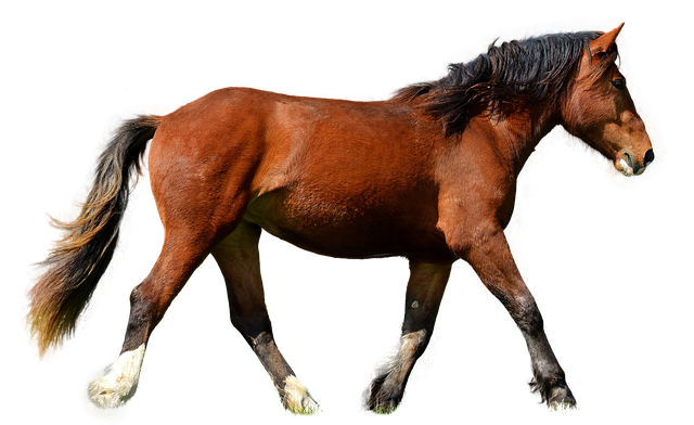 Horse, Isolated, Brown, Animal, Brown Horse, Mane, Ride
