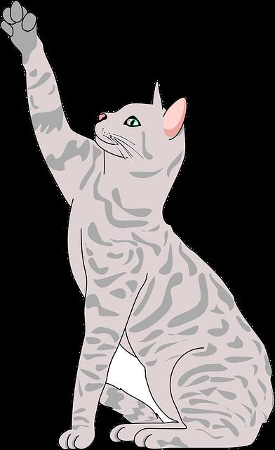 Animal, Cat, Cute, Kitty, Mao, Pet, Pose