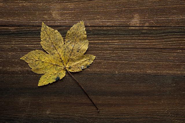 Maple Leaf, Leaf, Autumn Leaf, Autumn, Fall Color