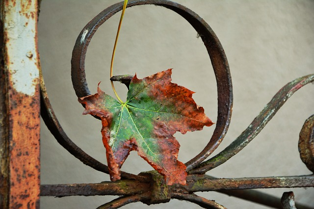 Autumn Leaf, Maple Leaf, Withered, Iron, Fence, Rusted