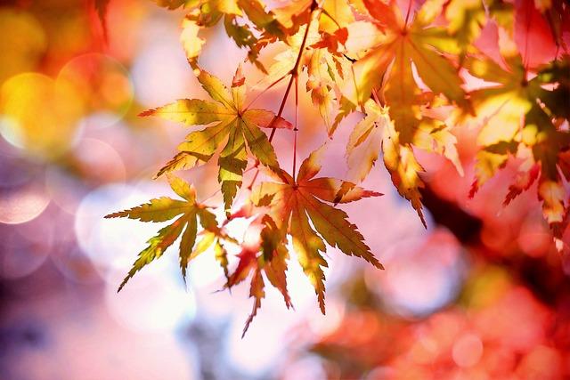 Maple, Maple Leaves, Emerge, Fall Foliage, Autumn