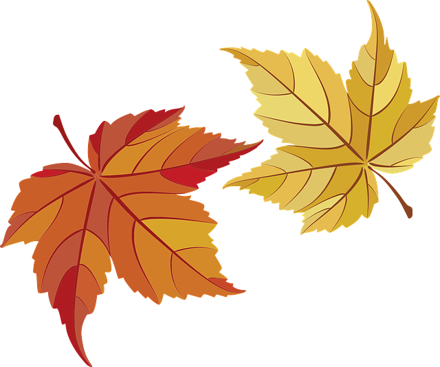 Maple Leaves, Maple, Leaves, Fall Foliage