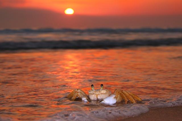 Siri, Sol, Beach, Mar