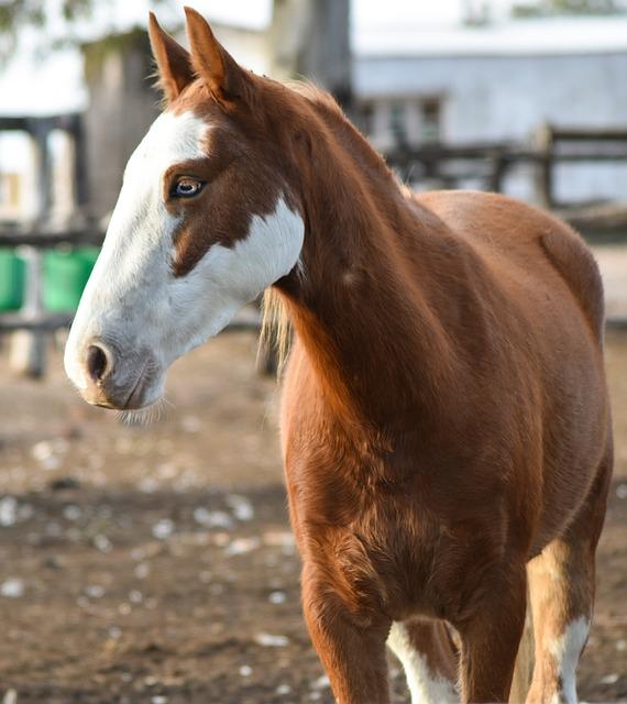Horse, Animal, Mare, Colt