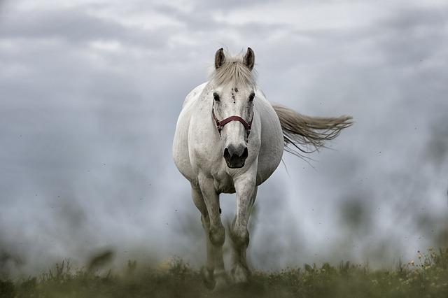 White Horse, Horse, Nature, Animal, Mare, Riding