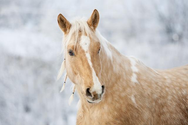 Horse, Gelding, Stallion, Mane, Animal, Pony, Mare