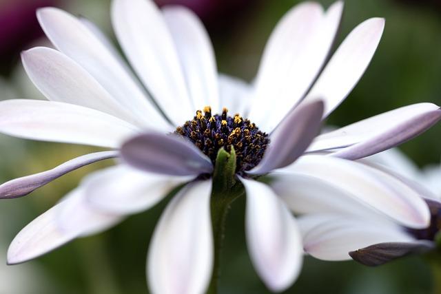 Marguerite, Flower, Plant, Petals, White Flower, Daisy