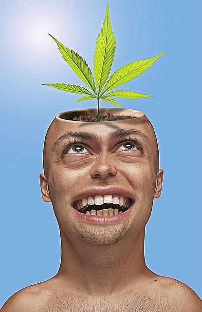 Caricature, Cartoon, Funny, Pot, Marijuana, Cannabis