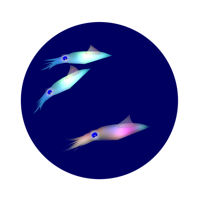 Squid, Light-emitting, Baby, Marine Animals