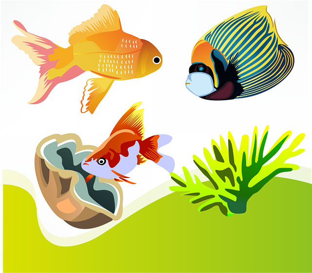Fish, Goldfish, Marine Diversity, Ornamental Fish
