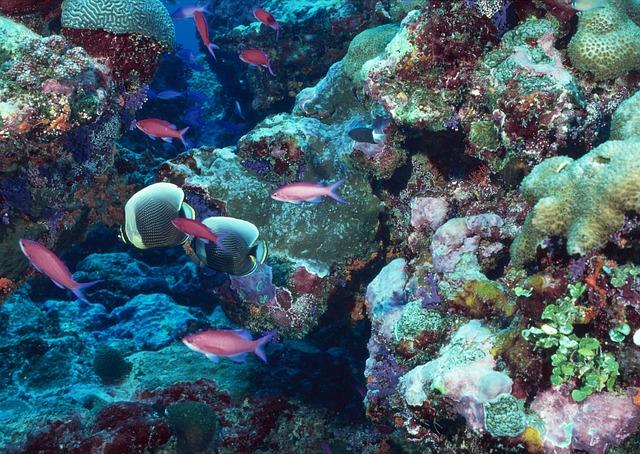 Marine, Harbour, Underwater World, Coral, Reef