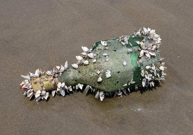 Bottle, Shells, Marine Organisms, Washed Ashore