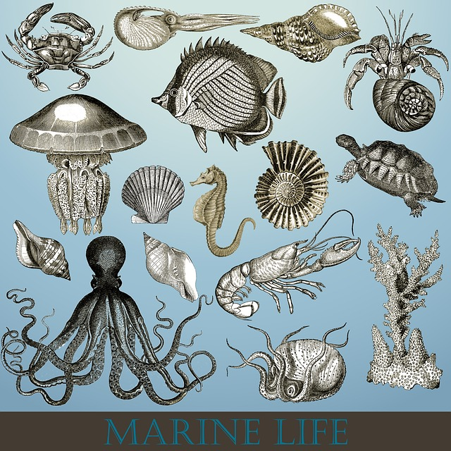 Marine Life, Marine, Sea Life, Sea, Ocean, Nature, Fish