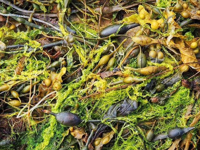 Seaweed, Sea, Weed, Algae, Marine, Food, Wet, Pool