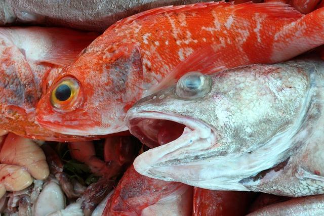 Morocco, Essaouira, Fish, Food, Market, Harbor, Seafood