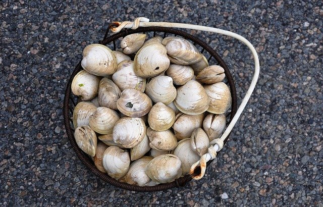 Clams, Cape Cod, Shellfish, Seafood, Massachusetts