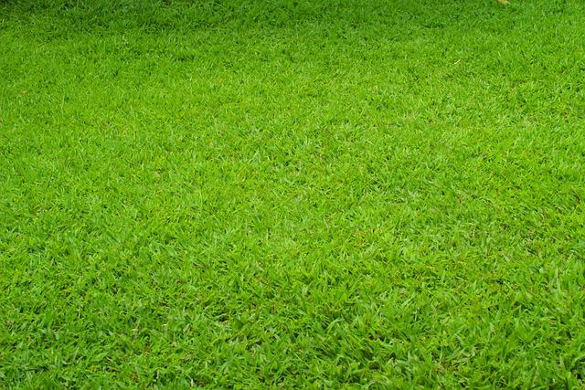 Green, Grass, Grassland, Material