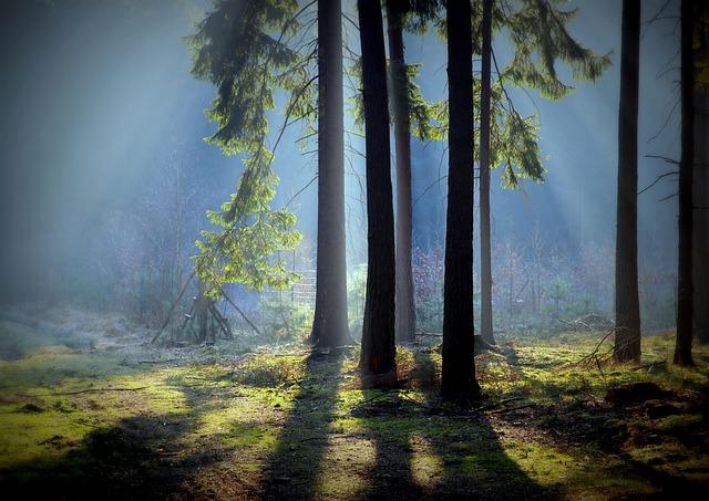 Mati, Tree, Nature, Moss, Forest, Forest Litter
