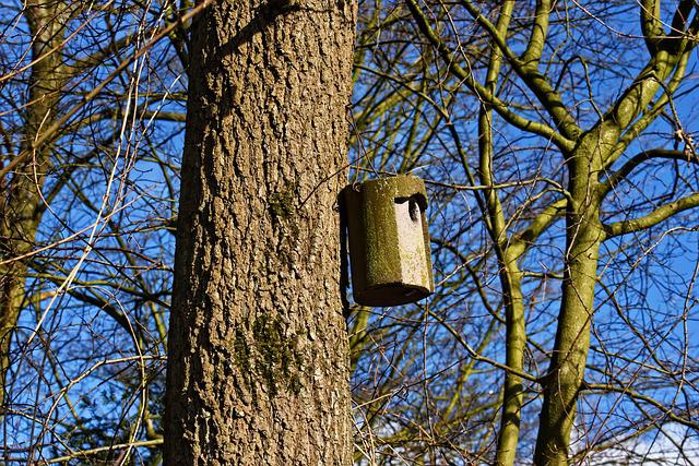 Nesting Box, Bird House, Bird, Mating, Mating Season