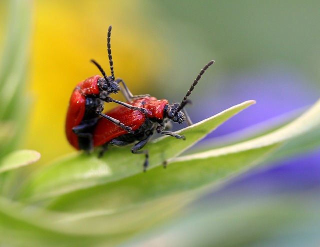 Insects, Red, Mating, Spring, Leaf, Nature