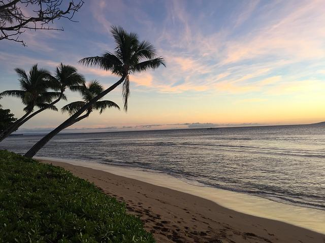 Hawaii, Molokai, Maui, Sunset, Beach, Coconut Trees