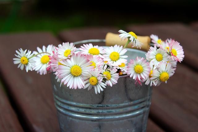 Daisies, Spring Flowers, Broken, Spring, May, Nature
