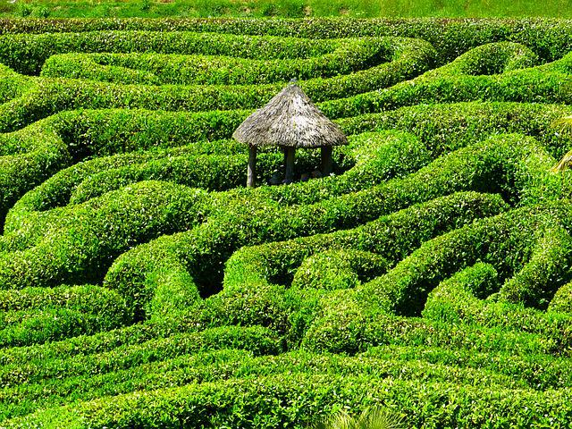 Maze, Labyrinth, Glendurgan, Garden, Cornwall