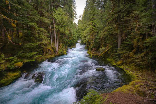 Mckenzie River, Central Oregon, Forest, Lush, River