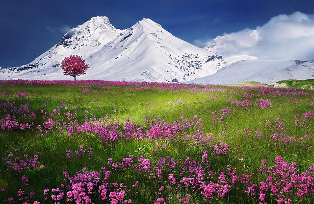 Mountains, Alps, Meadow, Summer, Landscape