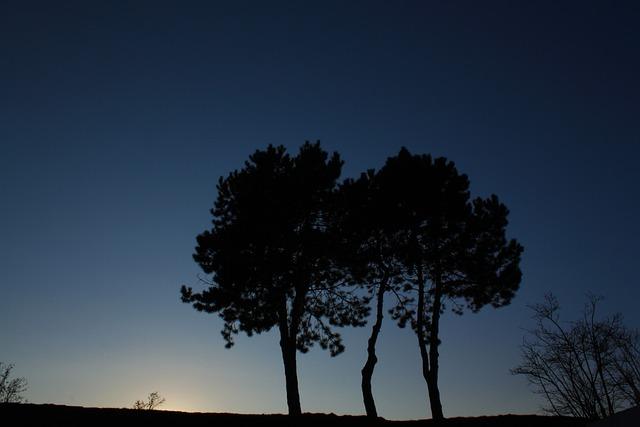 Tree, Bank, Lake, Lakeside, Meadow, Blue, Evening