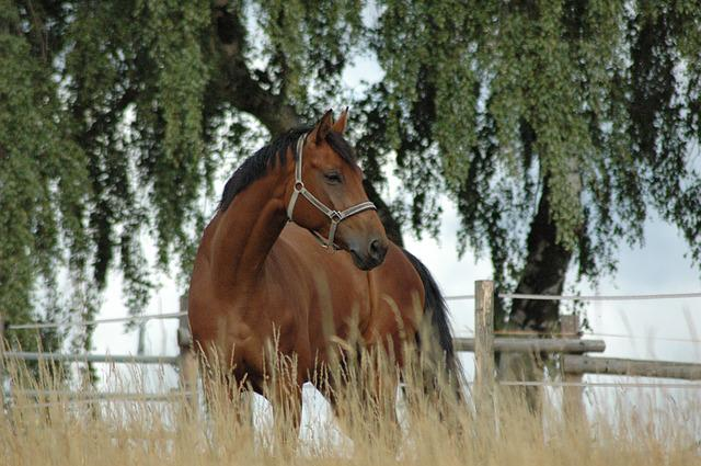 Horse, Coupling, Meadow