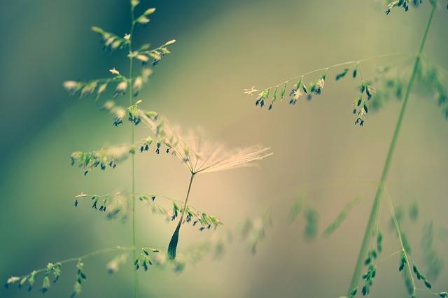 Nature, Grass, Seeds, Dandelion, Tender, Fine, Meadow