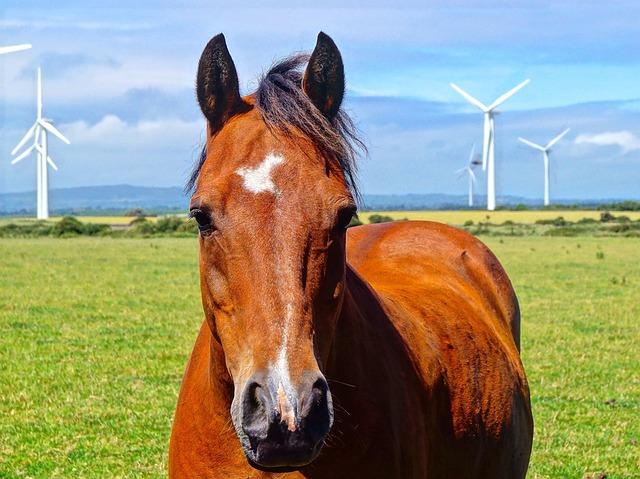 Farm, Meadow, Graze, Field, Agriculture, Horse, Arable