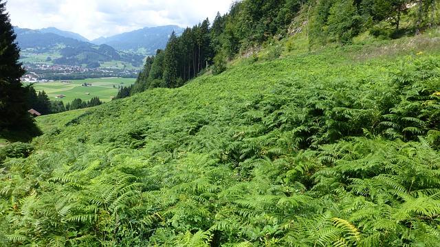 Allgäu, Castle Hill, Meadow, Fern