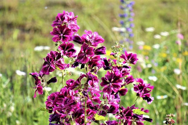 Meadow, Flowers, Violet, Figure, Flowers Meadows, Plant