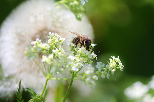 Bee, Flowers, Meadow, Sit, Sprinkle, Nectar, Insect