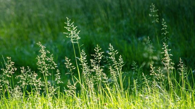 Grass, Meadow, Garden, Nature, Green, Grasses