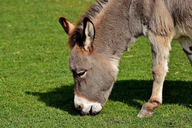 Donkey, Animal, Nature, Rural, Meadow, Graze, Eat