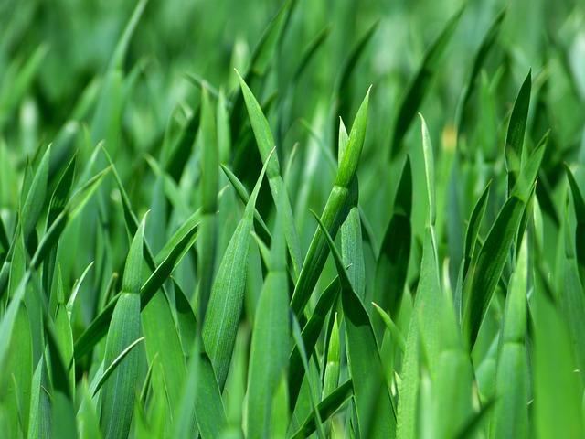 Grass, Blades Of Grass, Nature, Meadow, Close Up, Green