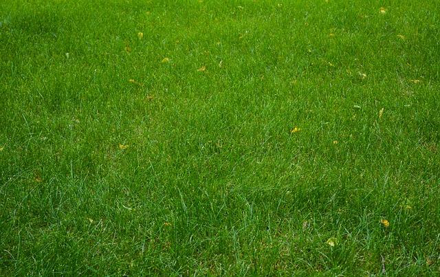 Lawn, Grass, Field, Meadow, Summer, Green, Nature
