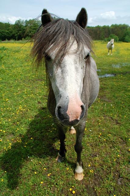 Muzzle, Horse, Meadow, Animal, Coat, Head, Nose, Eyes