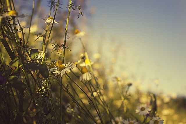 Summer, Holidays, The Background, Meadow, Dream, Heat
