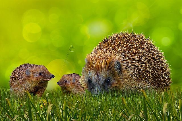 Animal World, Hedgehog, Background, Meadow, Sting