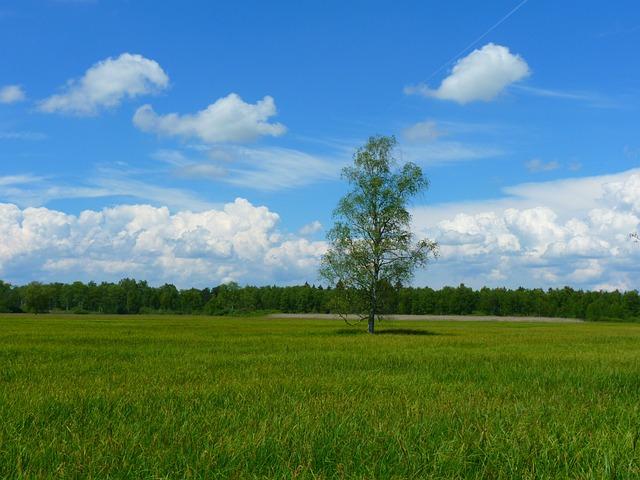Tree, Landscape, Meadow, Sky, Clouds, Idyll, Rest